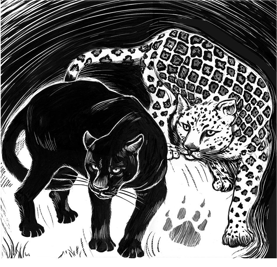 black jaguar and white jaguar scratchboard drawing
