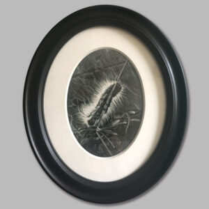 drawing of caterpillar in oval frame