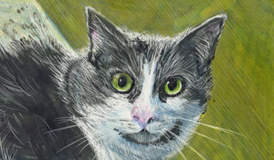 drawing of gray and white cat with large eyes rendered in colored scratchboard inks.