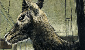 detail of drawing of antelope head mounted on a bookstore wall rendered in colored scratchboard inks.