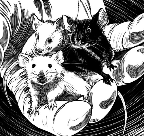 drawing of three lab mice in a persons hand.