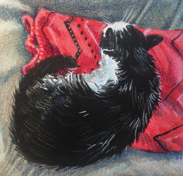 black and white cat curled up sleeping on a red patterned blanket.