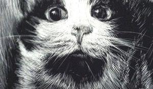 drawing of cute cat